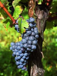La Complejidad del Vino