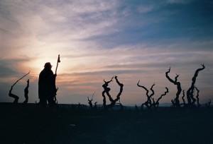 Peregrino en ruta por los viñedos de Navarra