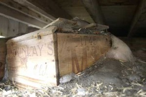 Las cajas de whisky de Shackleton