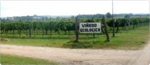 Viñedo Ecológico