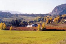 Viñedos Bodega F. Schatz
